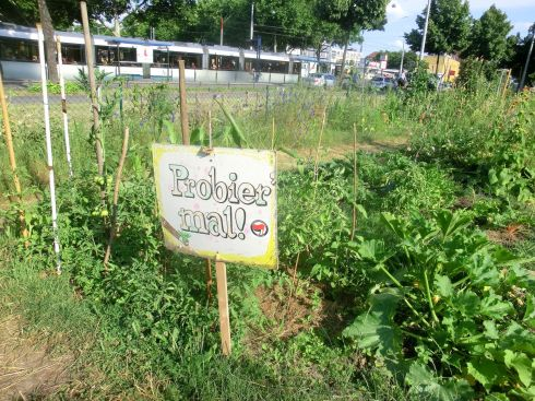 urban-gardening1